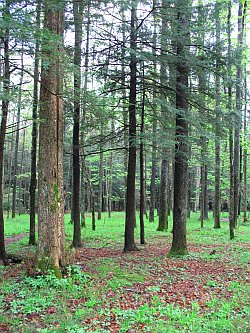 mon_forest.jpg